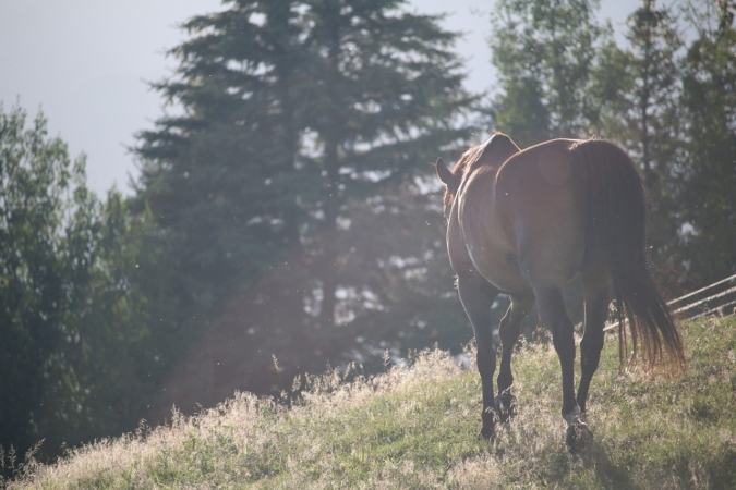 意味 塞翁が馬